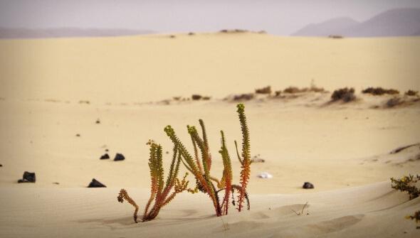 Fuerteventura. Die Biospäre